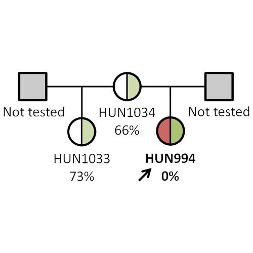 Investigation of the ADAMTS13 c.3178C>T mutation in hereditary and acquired thrombotic thrombocytopenic purpura
