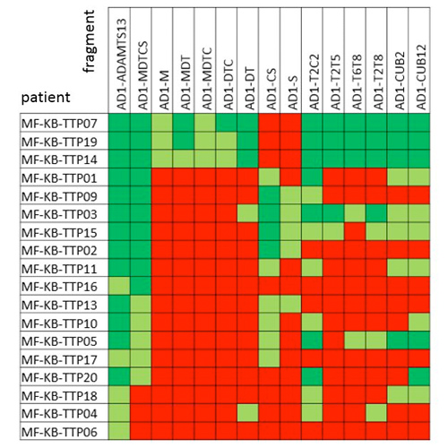In-depth epitope mapping of anti-ADAMTS13 autoantibodies in immune-mediated thrombotic thrombocytopenic purpura patients using a large library of ADAMTS13 fragments